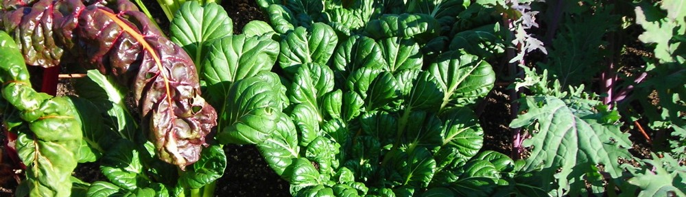 Fall greens in square foot gardening bed