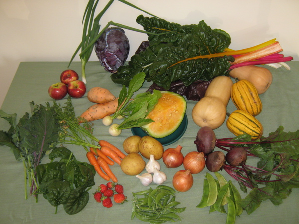 Fresh food from square foot gardens in October