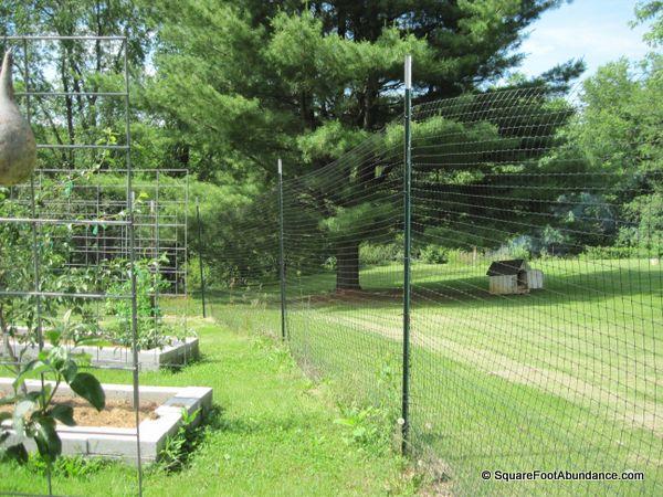 Deer and rabbit fencing