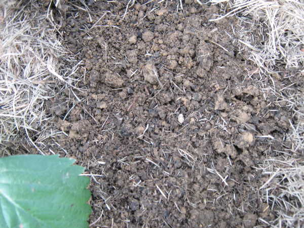 Soft rich clay loam soil