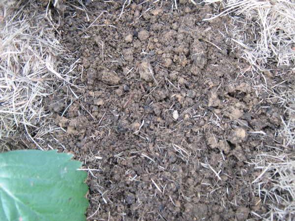 Soft rich clay loam soil
