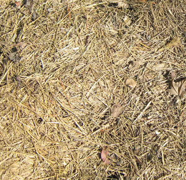 Grass mulch for garden