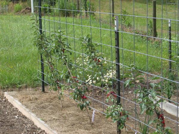 Part 6: Growing Dwarf Fruit Trees in Your Mini Fruit ...