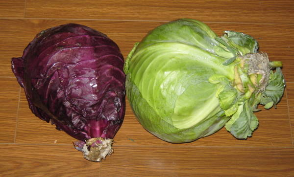 Stored cabbage heads in January