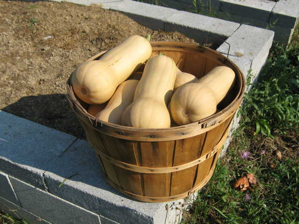 Bushel of squash