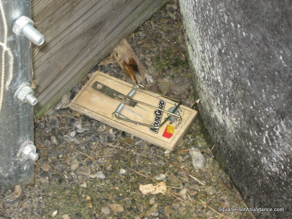 How to protect your garden from voles abundant mini gardens - Volle trap ...