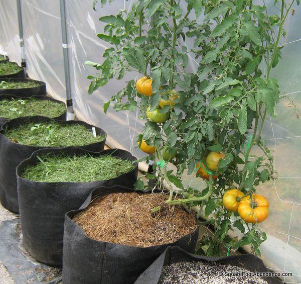 Six ways to prevent tomato diseases abundant mini gardens - Plants for inside the house ...
