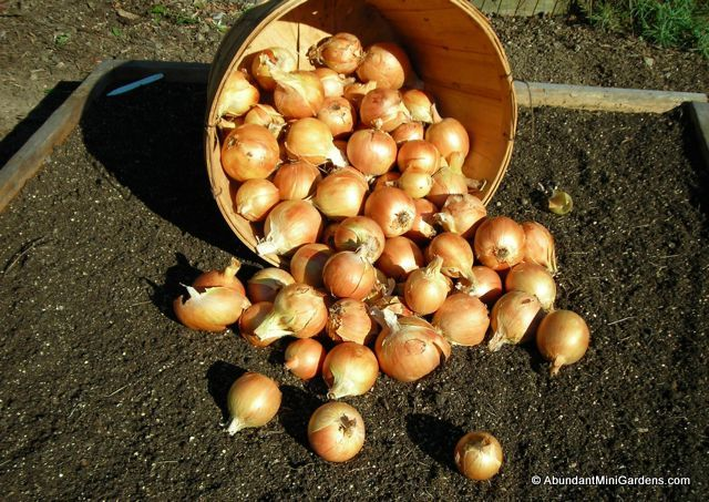 Bushel of onions