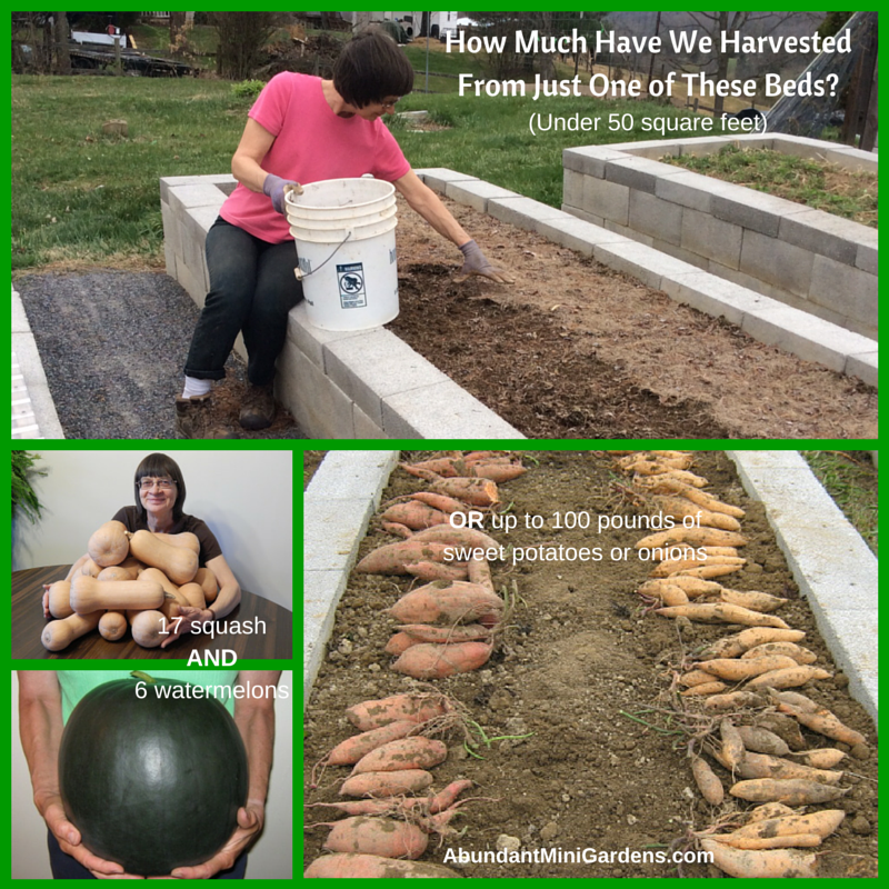 Large Organic Harvests From Raised Garden Beds
