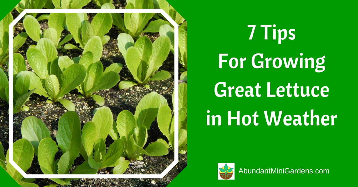7 Tips For Growing Great Lettuce In Hot Weather Abundant